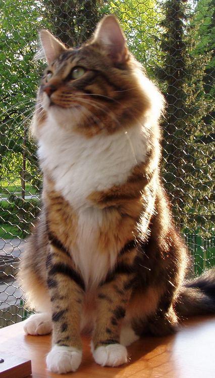 Stop týraniu zvierat ! - mačičky a niečo o nich - mačičky a niečo o nich 6024c952c6d